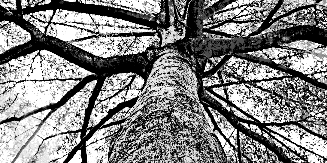The Tree of Breaking – A History