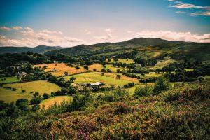 Haunt Landscape